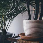 indoor air-purifier plants